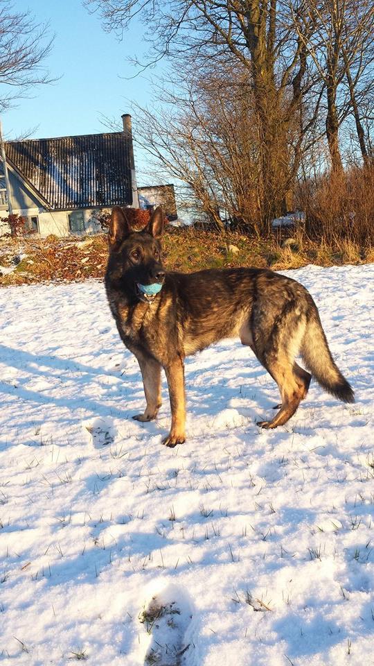 hundepension_vejle_foto_6