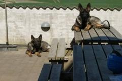 hundepension_vejle_foto_1