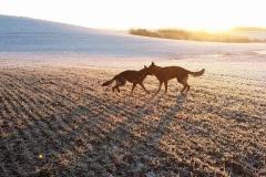 hundepension_vejle_foto_3