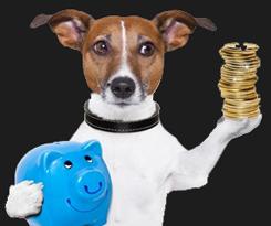 hundepension_vejle_betingelser_ophold
