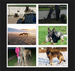 vores_hunde_gallery_forsiden